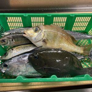 鮮魚セット1