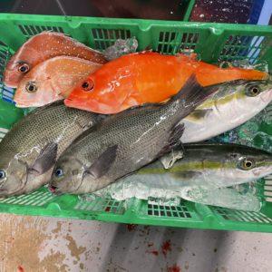 鮮魚セット3